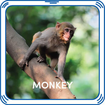 Have the most fun in the jungle with this monkey sound accessory! Bring your furry friend to life with sounds to make the perfect gift. Free Shipping on orders over $45.
