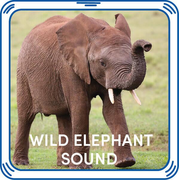 Wild Elephant Sound - Build-A-Bear Workshop®