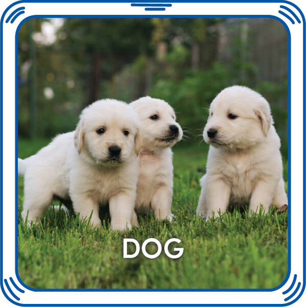 Woof woof! Add playful puppy sounds to any furry friend that will play every time you give it a hug. These lovable barks will make any stuffed animal sound like a darling dog.