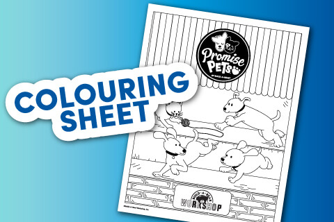 Promise Pets Coloring Sheet - Single page coloring sheet of pets playing